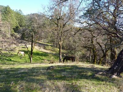 Potter Valley CA Residential Lots & Land For Sale: $495,000