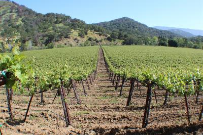 Napa County Residential Lots & Land For Sale: 3433 Wooden Valley Road