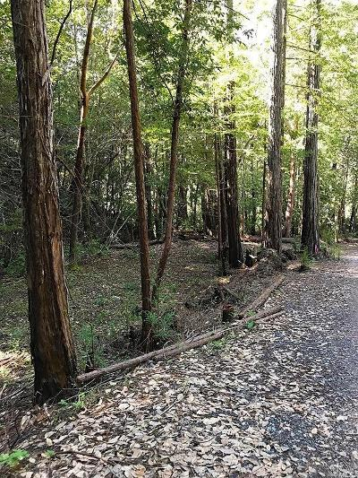 Guerneville CA Residential Lots & Land For Sale: $130,000
