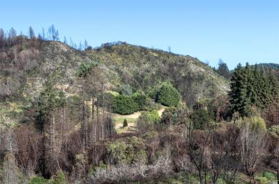 Calistoga Residential Lots & Land Contingent-Show: 3908 Mountain Home Ranch Road