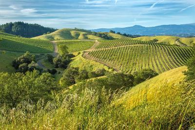 Sonoma County Residential Lots & Land For Sale: 1111 Vacherie Way
