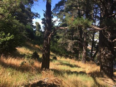 Corte Madera Residential Lots & Land For Sale: Casa Buena Road