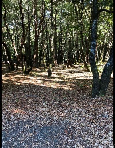 Willits Residential Lots & Land For Sale: 24535 Lilac Drive