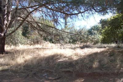 Lake County Residential Lots & Land For Sale: 4026 Lasky Avenue