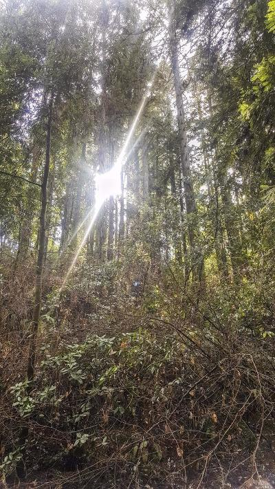 Guerneville Residential Lots & Land For Sale: 11775 Canyon Drive