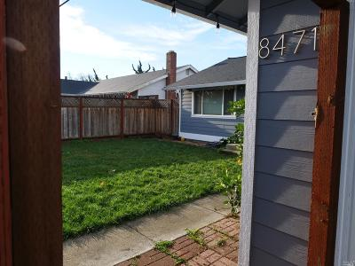 Cotati Single Family Home For Sale: 8471 Larch Avenue