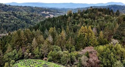 Mendocino Residential Lots & Land For Sale: 5364 Palmer Creek Road