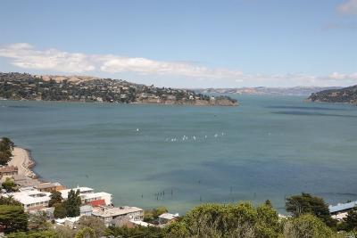 Sausalito Condo/Townhouse For Sale: 62 Marion Avenue
