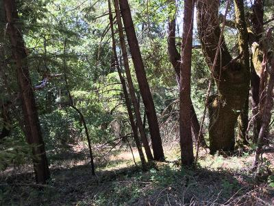 Cazadero Residential Lots & Land For Sale: 19800 Old Cazadero Road