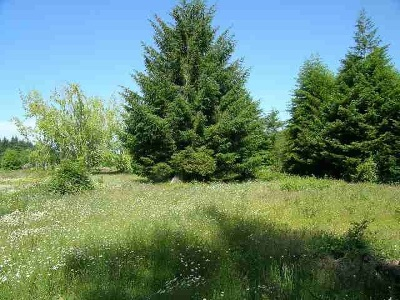 Residential Lots & Land For Sale: Paige Lane