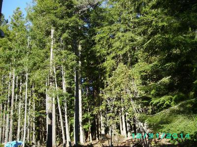 Mendocino, Fort Bragg, Caspar, Little River, Albion, Westport, Comptche, Elk, Navarro Residential Lots & Land For Sale: Caspar Little Lake Road