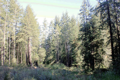 Mendocino, Fort Bragg, Caspar, Little River, Albion, Westport, Comptche, Elk, Navarro Residential Lots & Land For Sale: 27610 Highway 20