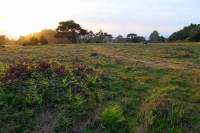 Mendocino, Fort Bragg, Caspar, Little River, Albion, Westport, Comptche, Elk, Navarro Residential Lots & Land For Sale: 44661 Caspar Orchard Road