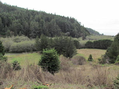 Mendocino, Fort Bragg, Caspar, Little River, Albion, Westport, Comptche, Elk, Navarro Residential Lots & Land For Sale: 23900 Dehaven Creek Road