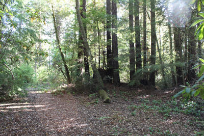 Mendocino CA Residential Lots & Land For Sale: $265,000