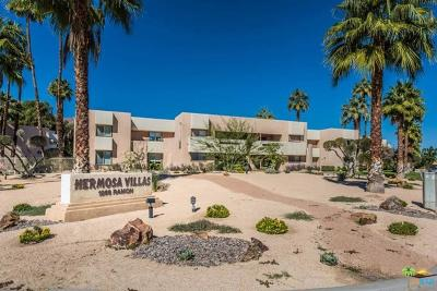 Palm Springs Rental For Rent: 1268 East Ramon Road #39