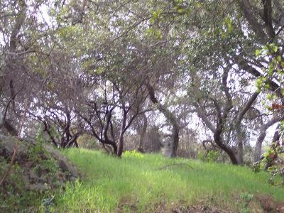 Calabasas Residential Lots & Land For Sale: 24761 Mulholland Highway
