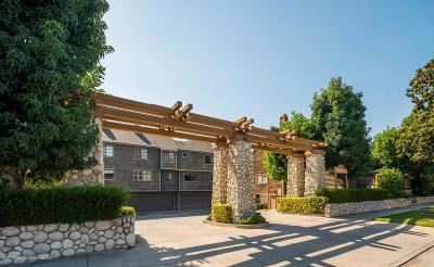 Pasadena Condo/Townhouse For Sale: 249 Alpine Street #52
