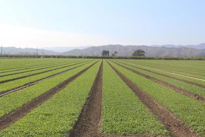 Santa Paula Residential Lots & Land Active Under Contract: 630 Todd Road