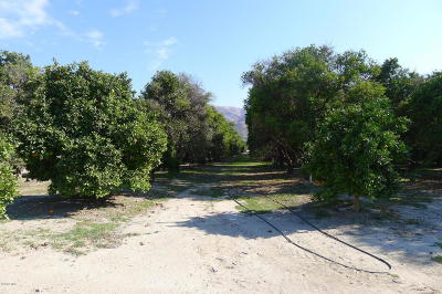 Ventura County Residential Lots & Land For Sale: 3800 E Telegraph Road