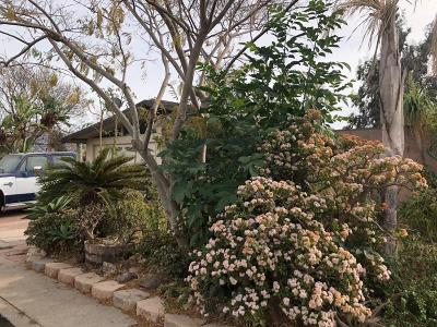 Camarillo Single Family Home Active Under Contract: 2282 Grandview Drive