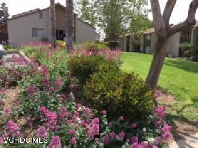 Ventura Single Family Home Active Under Contract: 1568 Echidna Lane