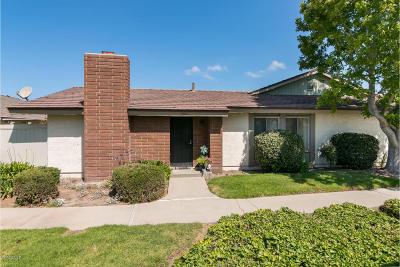 Oxnard Single Family Home Active Under Contract: 504 Holly Avenue