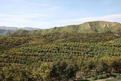 Santa Paula Residential Lots & Land For Sale: Fagan Canyon