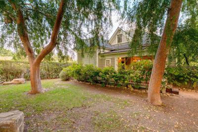Ojai Single Family Home For Sale: 219 E Oak Street
