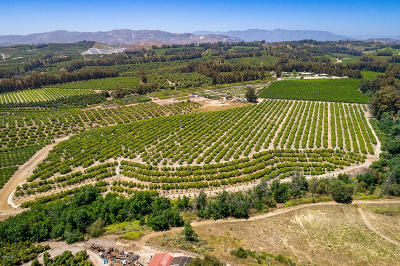 Ventura County Residential Lots & Land For Sale: Sand Canyon Road