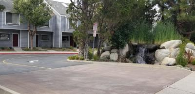 Camarillo Rental For Rent: 717 Arneill Road #70
