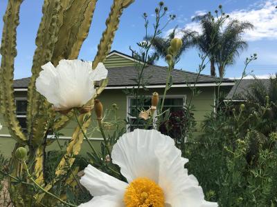 Fillmore Single Family Home Active Under Contract: 1230 Sespe Avenue