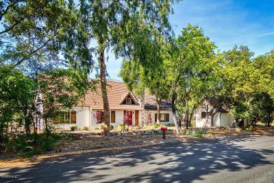 Ojai Single Family Home For Sale: 504 W Eucalyptus Street