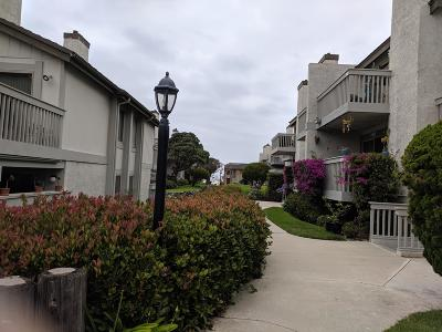 Oxnard Condo/Townhouse For Sale: 2963 Harbor Boulevard