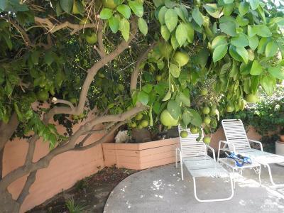 Palm Desert Condo/Townhouse Contingent: 47112 El Menara Circle