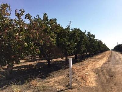 Madera County Farm For Sale: Road 24