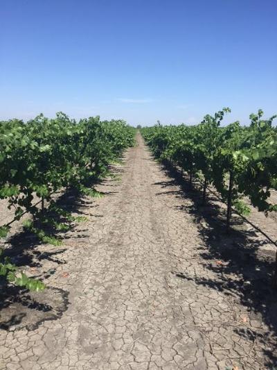 Fresno County Farm For Sale: 9246 S El Dorado Avenue