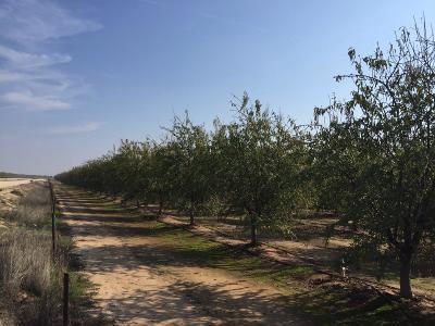 Madera County Farm For Sale: Avenue 9