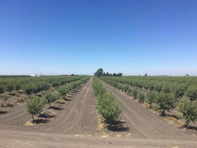 Kings County, Merced County Farm For Sale: 44895 Hobart Road