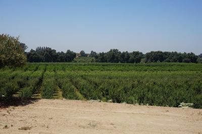 Reedley Farm For Sale: 6947 S Reed Avenue