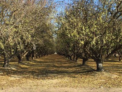 Madera County Farm For Sale: 8335 Road 23 1/2