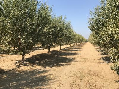 Dinuba Farm For Sale: Road 57