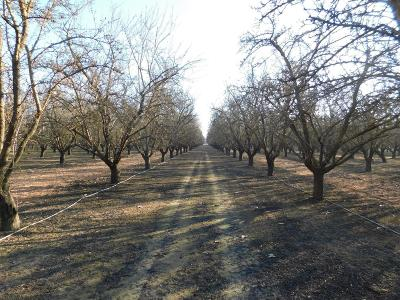 Madera County Farm For Sale: 21680 Road 16