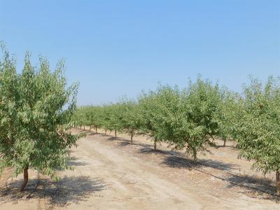 Kern County, Merced County Farm For Sale: 4035 Clausen Road