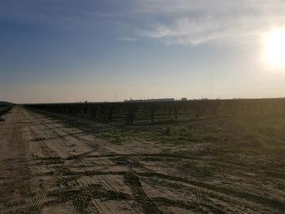 Fresno County Farm For Sale: 2599 E Nebraska Avenue