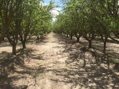 Fresno County Farm For Sale: 9425 W Jensen Avenue