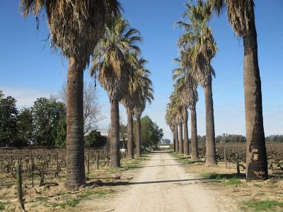 Selma CA Farm For Sale: $1,400,000