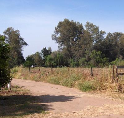 Reedley Farm For Sale: 22149 E Adams Avenue