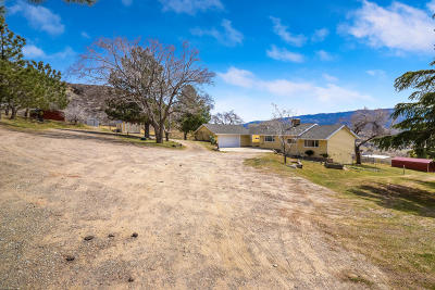 Leona Valley Single Family Home For Sale: 8822 Babia Street