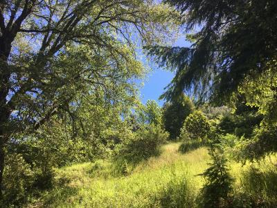 Garberville Residential Lots & Land For Sale: 221 Mosswood Lane